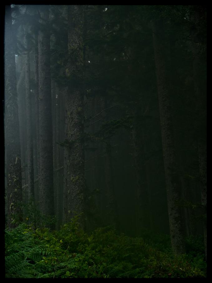 Mist Clad