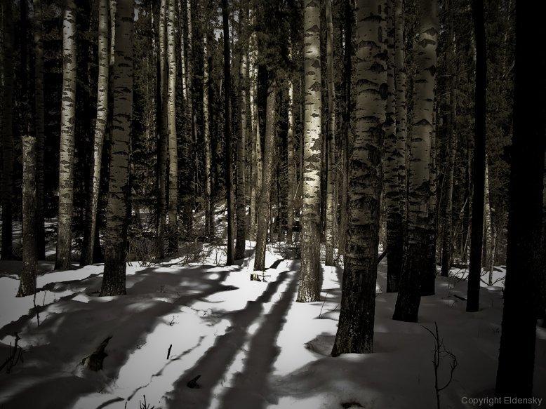 Upon Snow