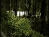 Promo XII ~ Voice of Trees
